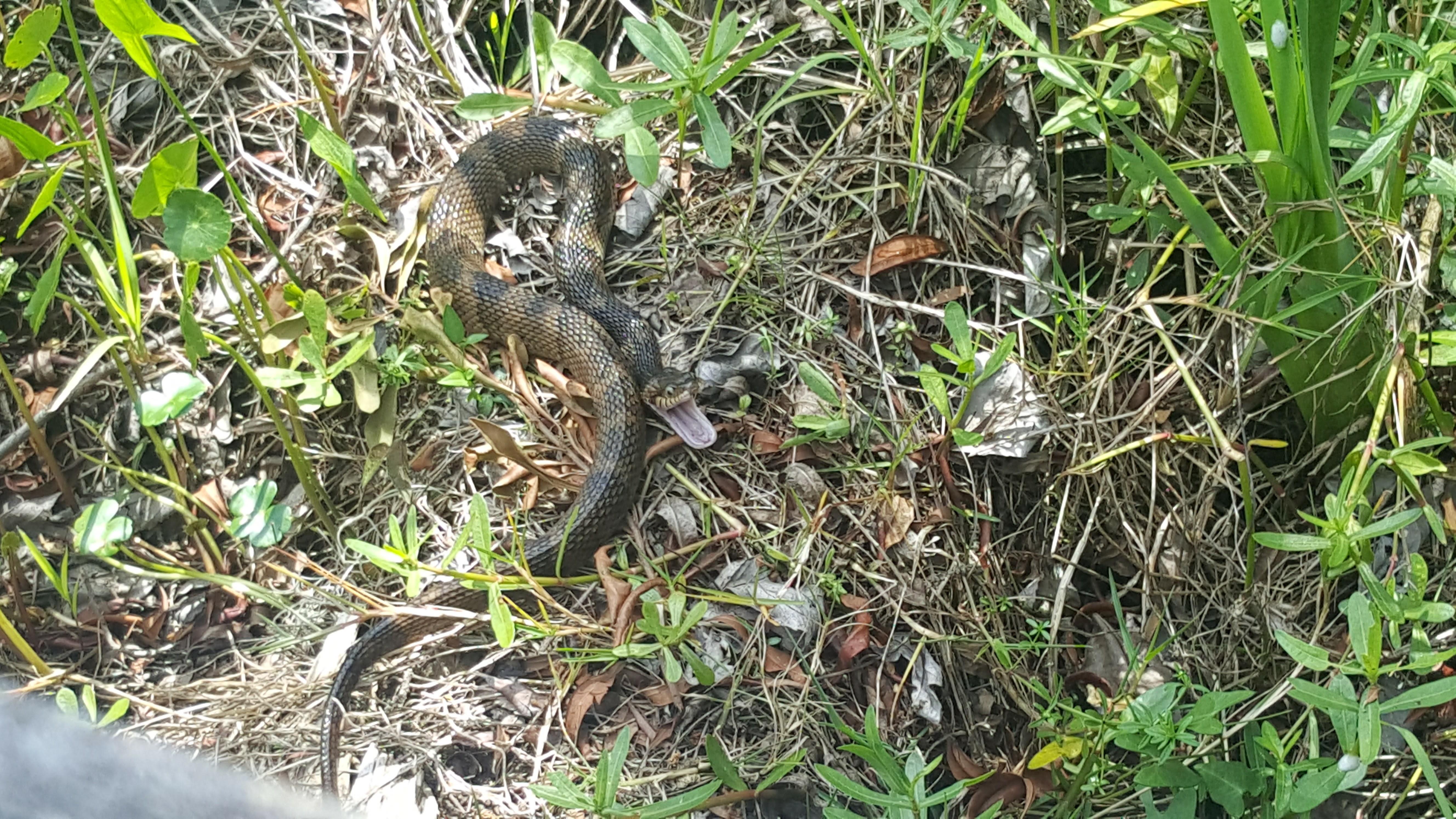 Hey snake