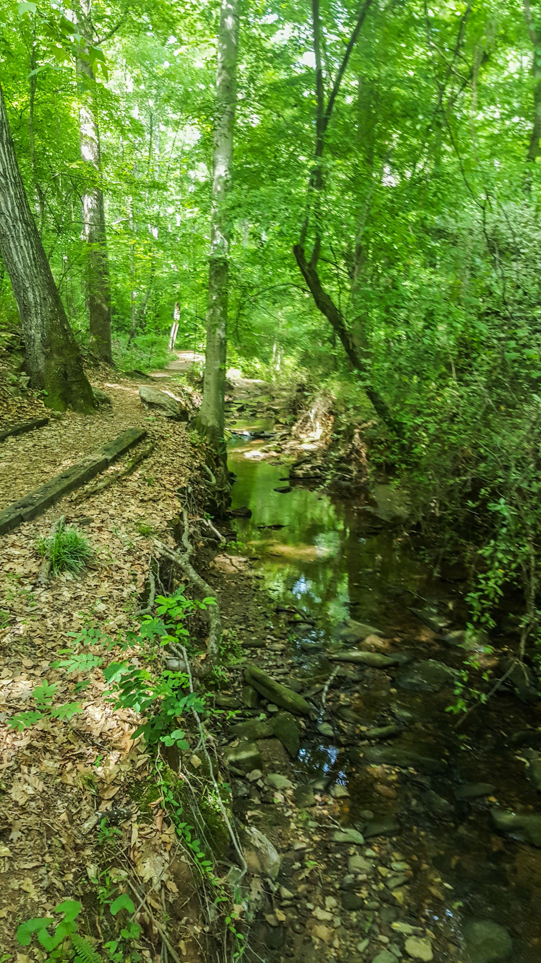 Big Trees Forest Preserve | 52 Hike Challenge 2017 | Hike 8